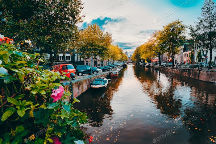 Evening twilight over beautiful Amsterdam canals in autumn. flowers in foreground