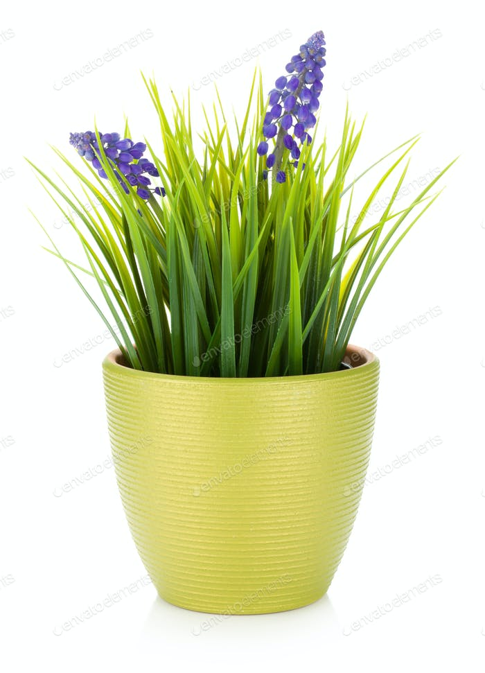 Decorative flower in flowerpot