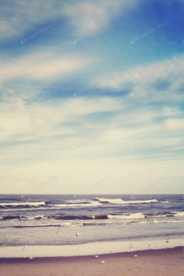 Color toned peaceful sea landscape with seagulls
