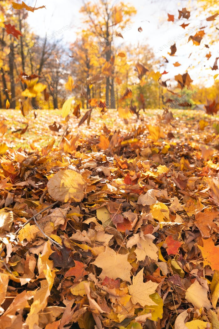 Autumn forest background with falling leaves