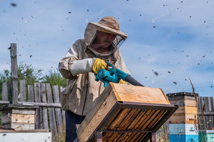 Beekeeper uses air-blowing device to brush bees aside. Bees swarm in collection container. Beekeeper