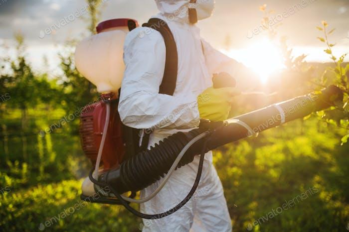 Ein Bauer im Freien in Obstgarten bei Sonnenuntergang, mit Pestizid-Chemikalien