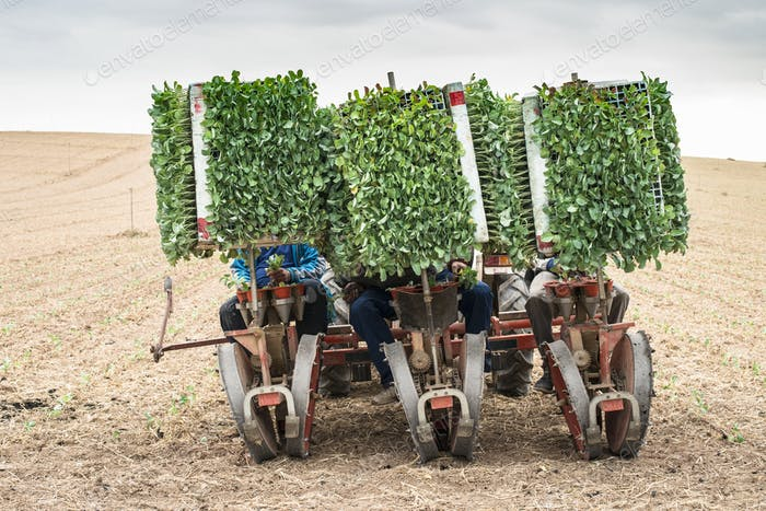 Planting seedlings machine