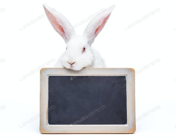 Rabbit over the blank blackboard