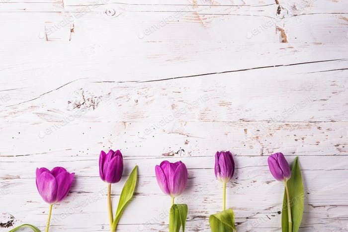 Violet tulip flowers on a white wooden background. Copy space.