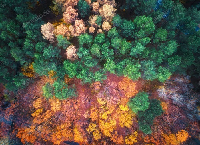 Aerial view of beautiful autumn forest at sunset. Landscape