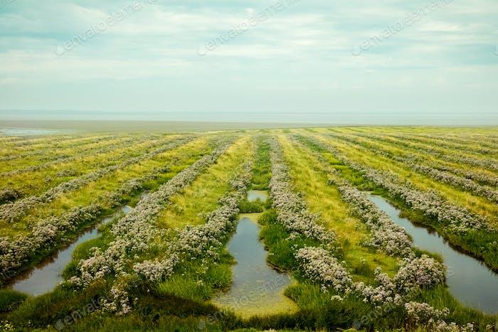 Belo campo perto do mar