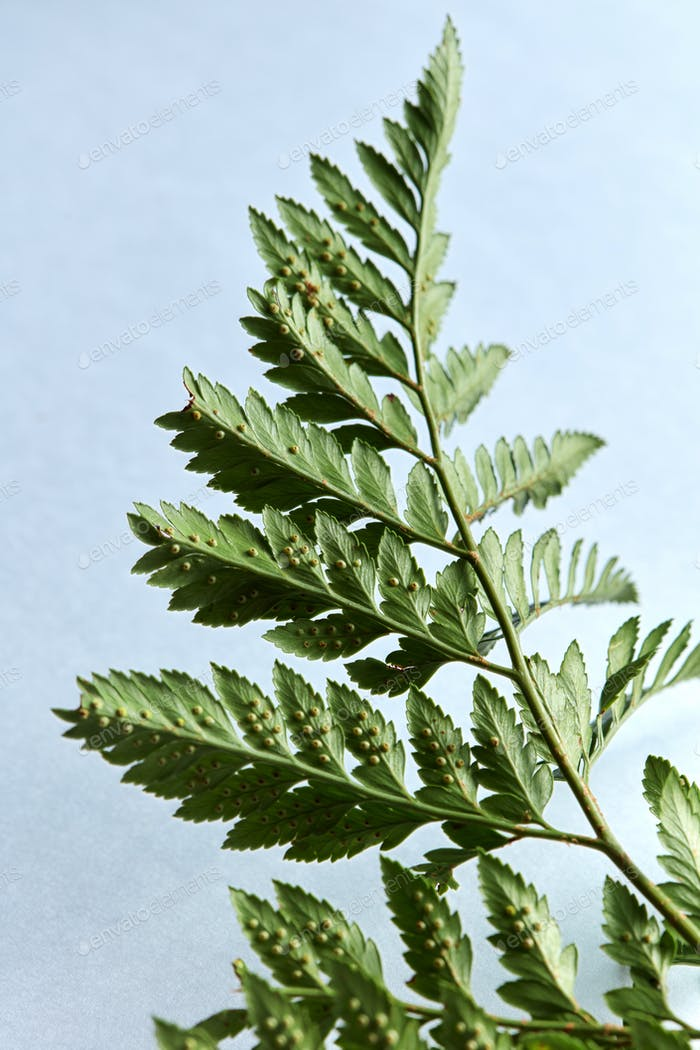 Beautiful green leaf of fern on a gray background with bright light and copy space. Natural layout