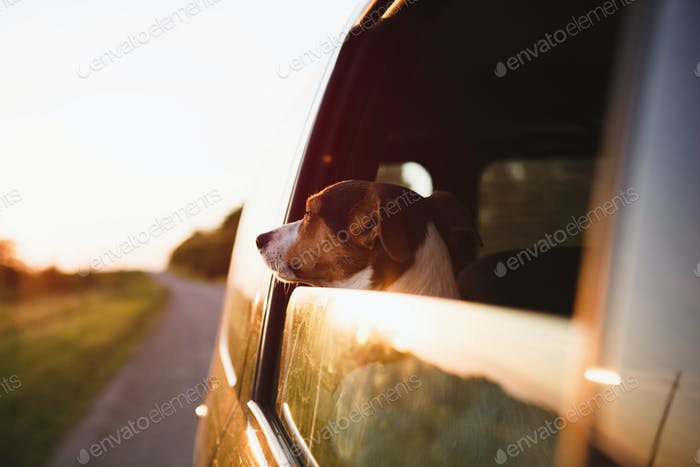 Dog peeking in from the open window of the car.