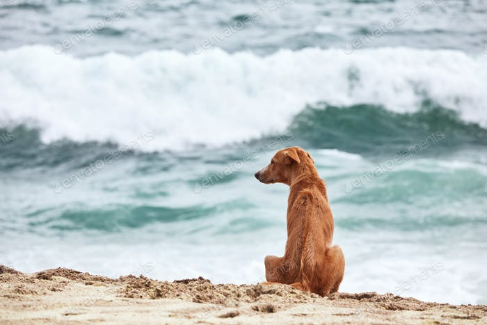Lonely dog sitting on beach