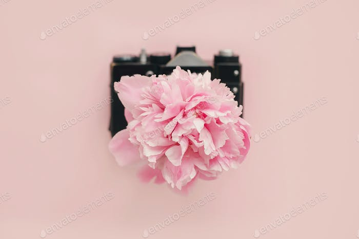Pink peony growing from vintage photo camera on pastel pink paper
