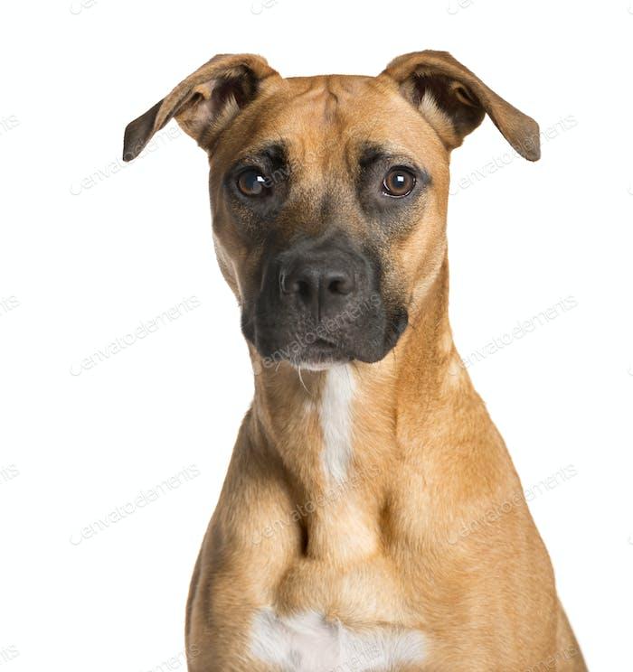 Nahaufnahme eines gemischten Hundes Blick auf die Kamera, Hund, Haustier, Studiofotografie, ausgeschnitten