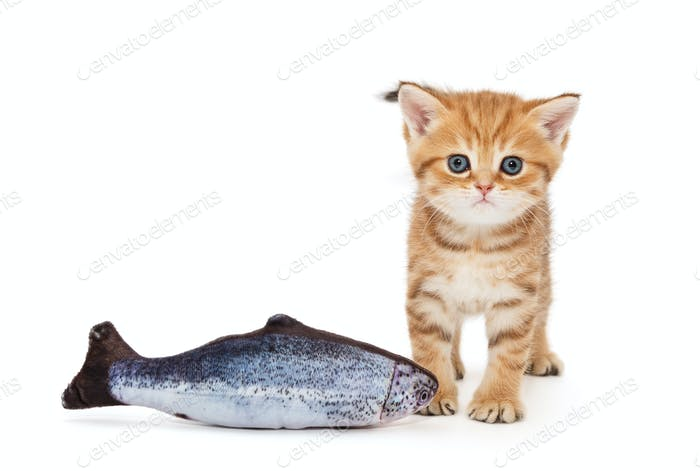 Little kitty and  fish salmon