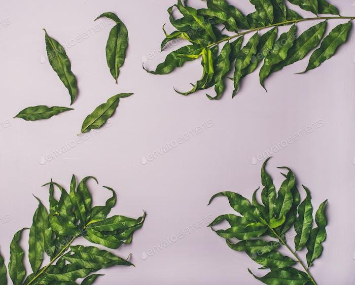 Árbol tropical hojas verdes sobre Fondo lila pastel, espacio de copia