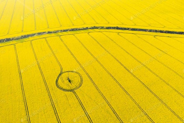 Luftbild Drohne Drone Draufsicht des gelben blühenden Feldes