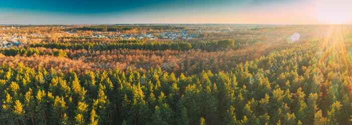 Aerial View Of Deciduous Trees Without Foliage Leaves And Green Pine Forest In Landscape During