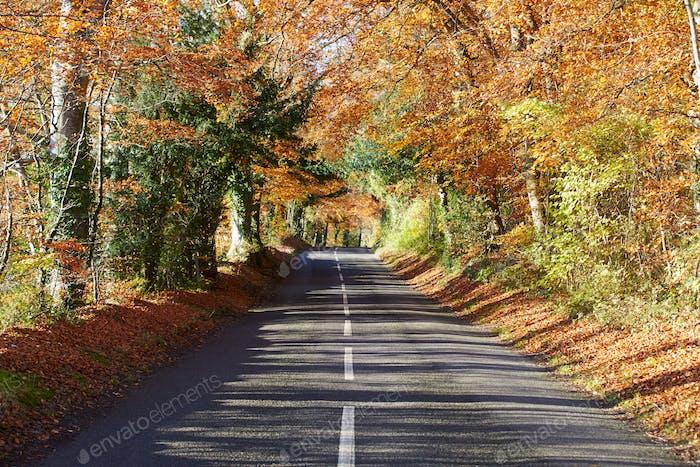 Landstraße durch Herbstwald
