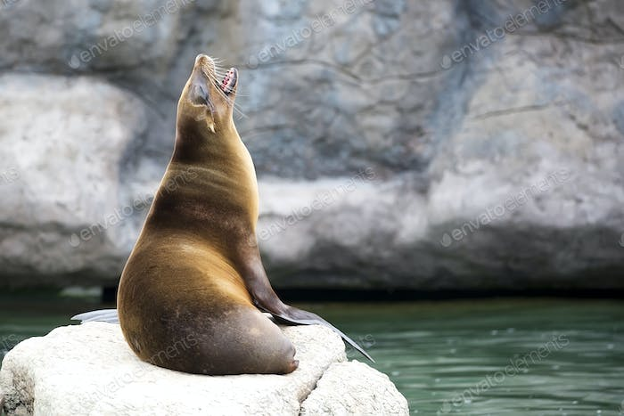 Seal on the stone