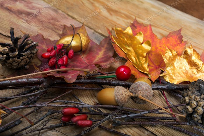 Thanksgiving background with acorns, golden and colorful maple l