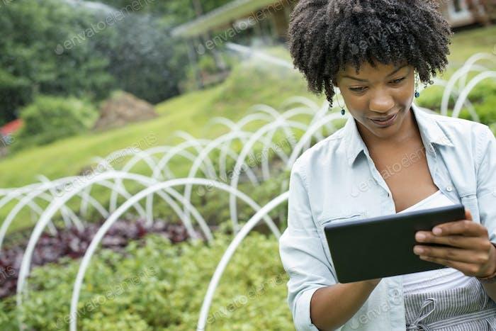 Ein Bio-Gartenbau-Gärtnerei und Bauernhof außerhalb von Woodstock. Eine Frau, die ein digitales Tablet hält.