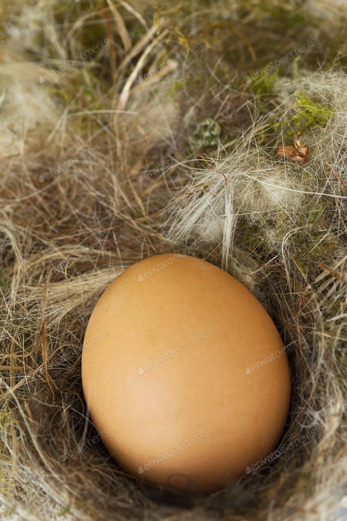 Close up of an egg