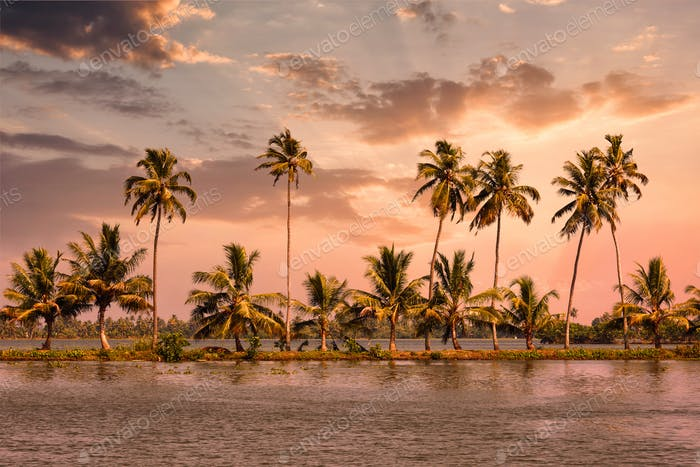 Kerala backwaters with palms on sunset