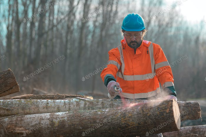 Forestry technician marking logs for firewood with red aerosol paint