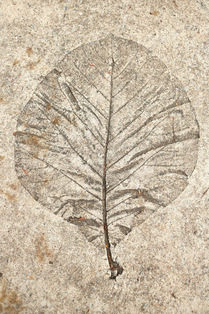Leaf print on cement floor