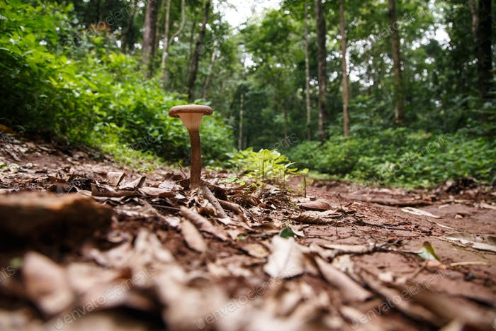 Wild Mushroom in Forest