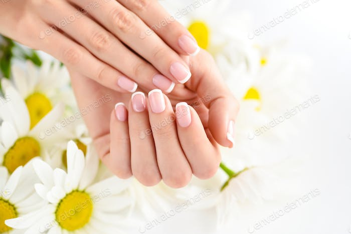 Beautiful woman french manicured hands with fresh daisy flowers