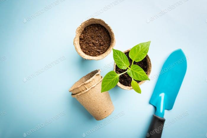 Seedlings with garden tools