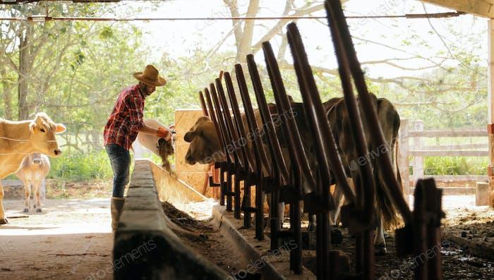 Farmer Feeding Animals Peasant Man At Work In Farm