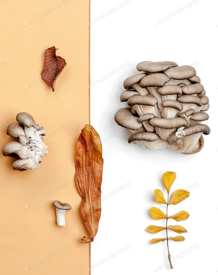 Composition from fresh oyster mushrooms and dry autumn leaves on