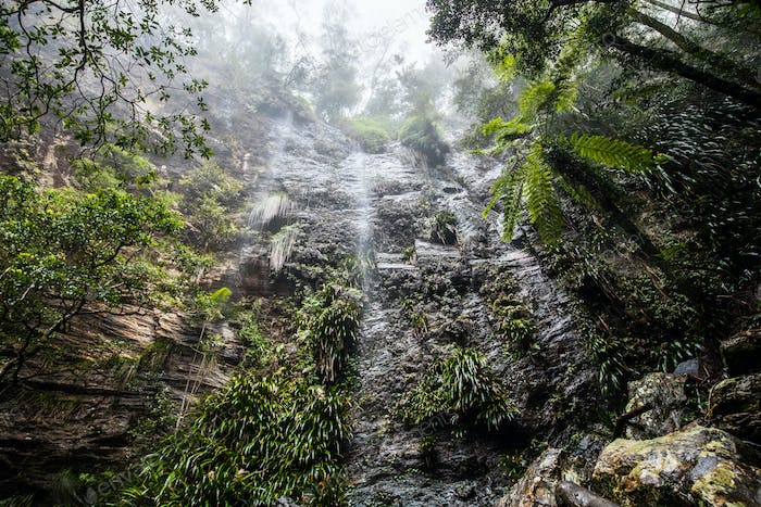 Twin Falls hike in the Springbrook National Park, Australia