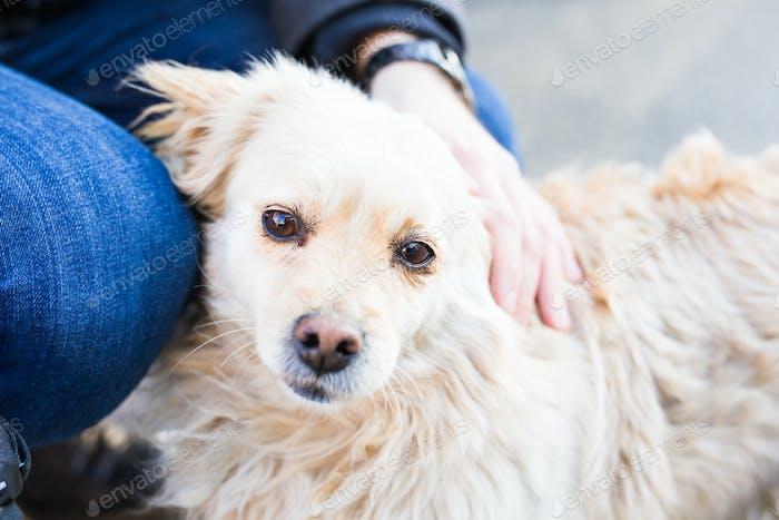 Besitzer streicheln sanft ihren Hund