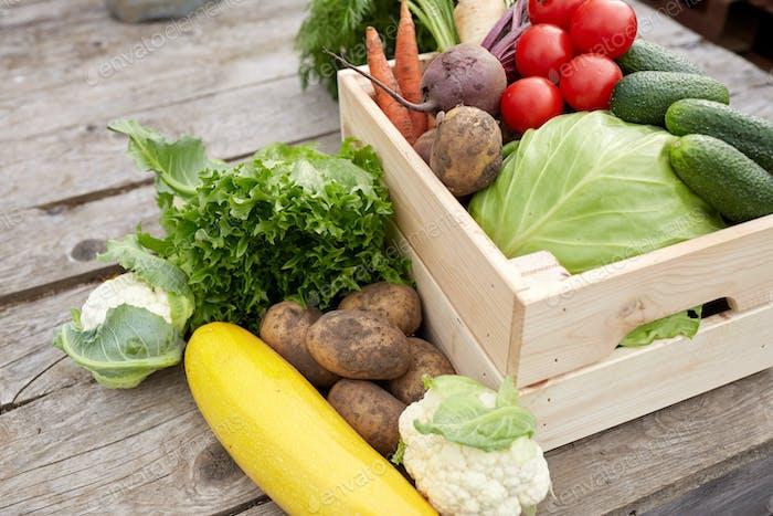 Nahaufnahme von Gemüse auf dem Bauernhof