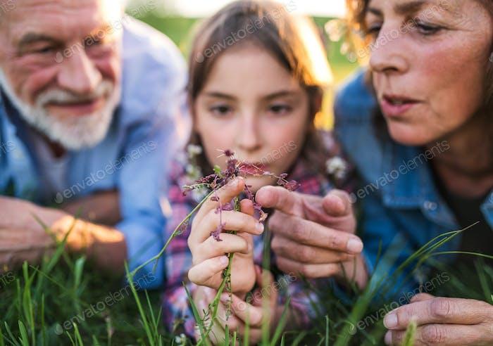 Pareja sénior con nieta fuera en la Naturaleza de primavera, Relajante en la hierba.