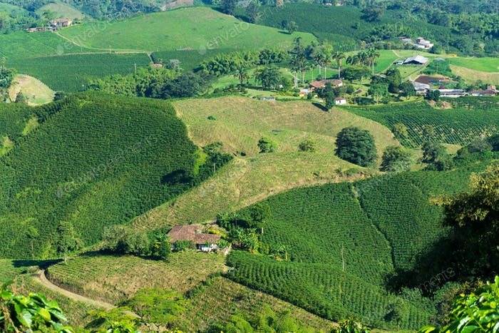 Colombian Coffee Farms
