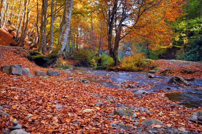 Beautiful landscape with stream in autumn forest