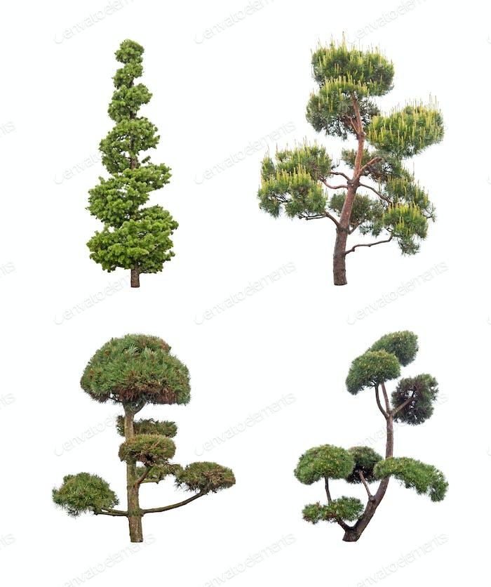 decorative pine tree