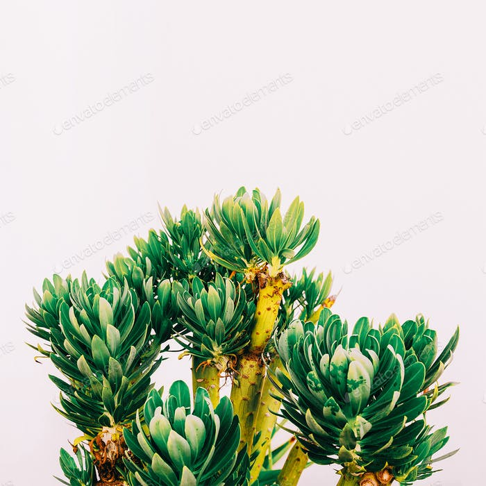 Outdoors. Minimal fashion design. Tropical plant on a white wall