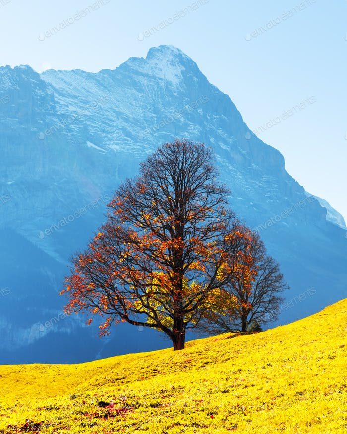 Picturesque autumn landscape in Grindelwald village