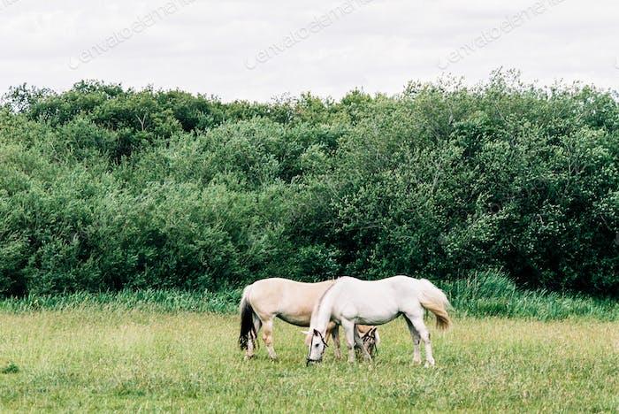 Symmetrical horses