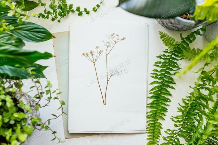 Herbarium and plants