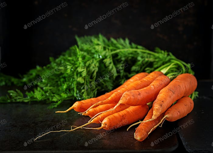 Bunch of fresh carrots with green leaves on  dark  background.