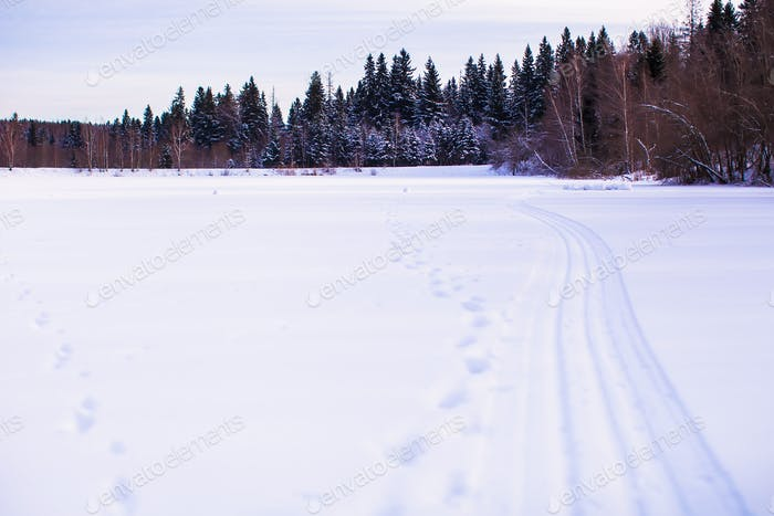 Winter landscape with forest on the back
