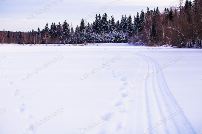 Winterlandschaft mit Wald auf der Rückseite