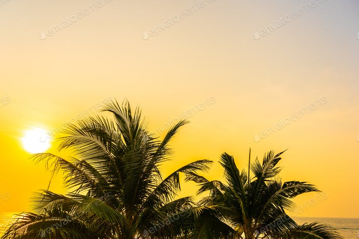 Beautiful outdoor nature with coconut leaf with sunrise or sunse