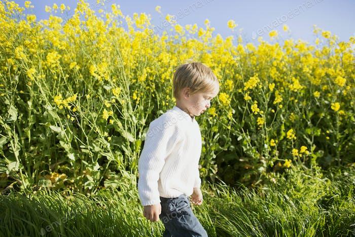 Junge zu Fuß auf Ölsamen-Rapsfeld