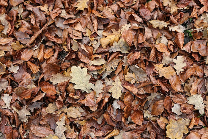 Autumnal background with brown fallen leaves